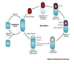Molecular Biology Lab and Biochemistry Lab Resume Sample
